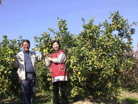 最終の農薬散布から収穫まで、最低2か月以上期間を空けます! (10月採取のレモン・みかんで約3ヶ月、1月採取のレモン等で6ヶ月以上無農薬栽培です。)